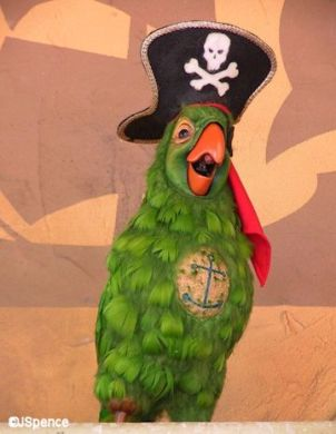 Disney pirates-of-the-caribbean bird