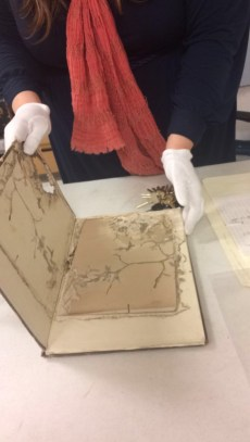 Holly handles the rat-eaten and moldy book with gloves.
