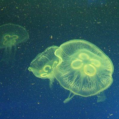 122. A Whole New Unexplored World Under the Sea | Karen Lloyd