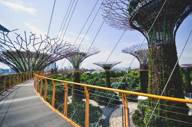 Singapore's Super Trees, tall metal structures covered in green vines