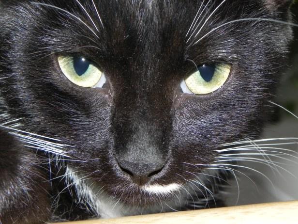 Lilah Zuul McScratcherson (cat)