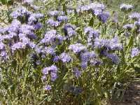 New Mexico Wild Flowers