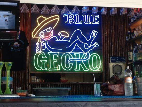 blue gecko | distantlocals.com
