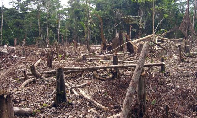 Los bosques que se fueron: América Latina perdió 97 millones de hectáreas en 25 años