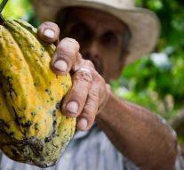 El cacao es beneficioso en la regulación del sistema inmunitario