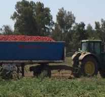 Nestlé dona más de 53 toneladas de tomate Solís