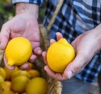 El cultivo de limón ecológico crece casi un 400% en ocho años