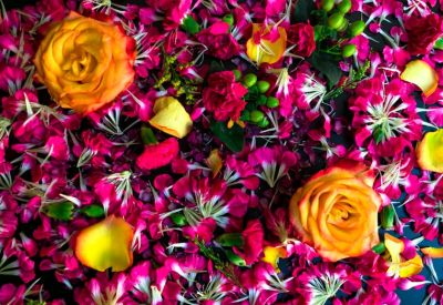 Bed of colorful pink flower petals and yellow roses.