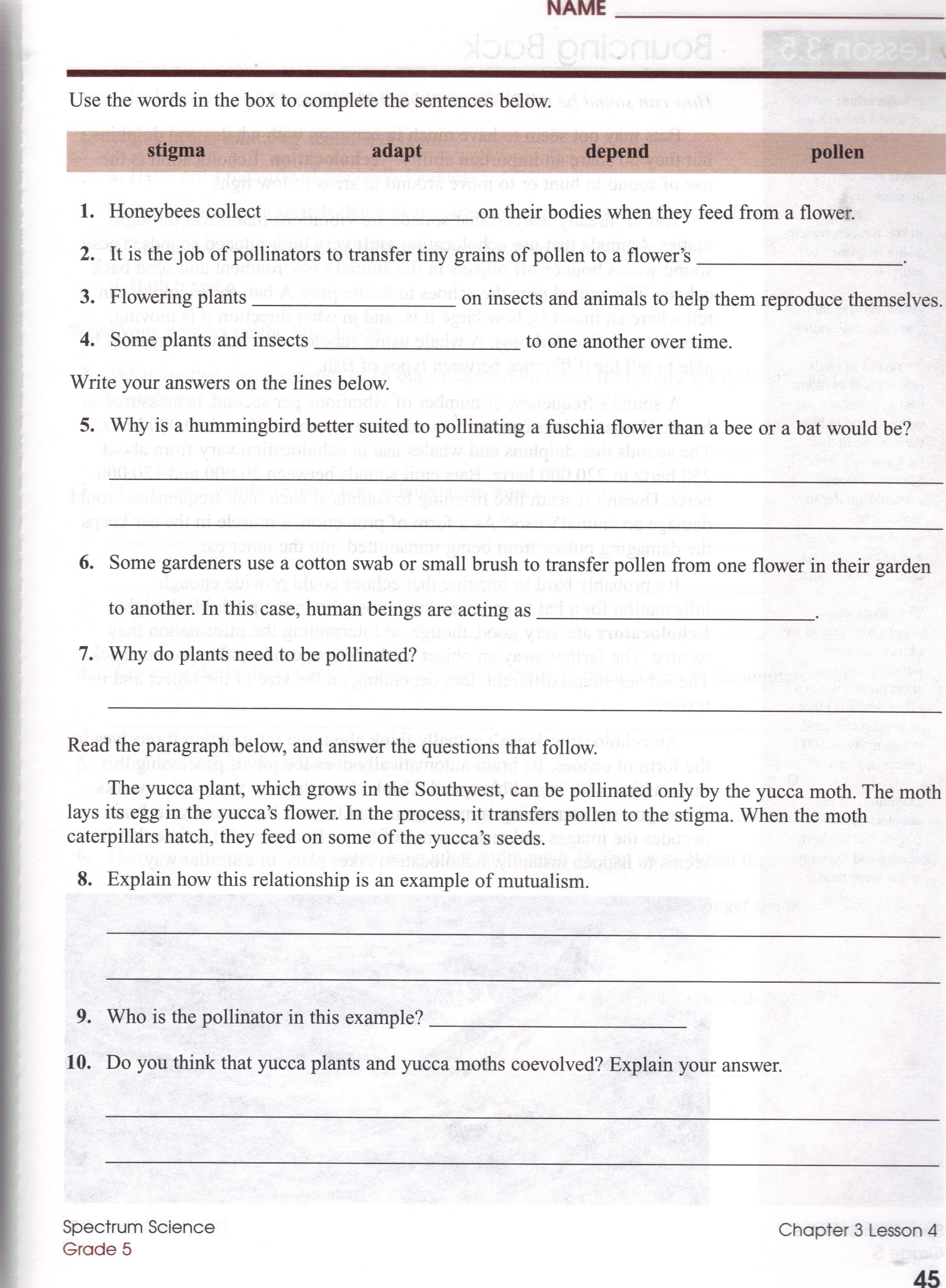 Ditoddfifthgrade Ecosystems Worksheets