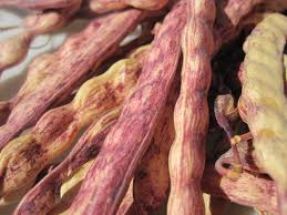 Mesquite Red Pods