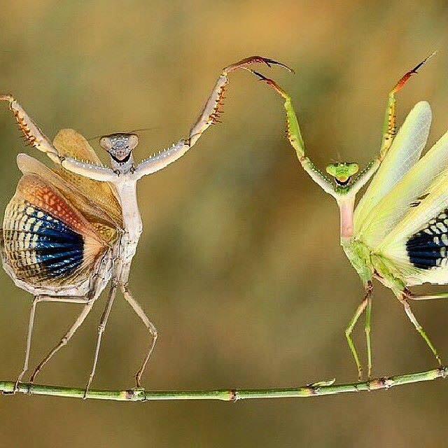 mantis partner yoga