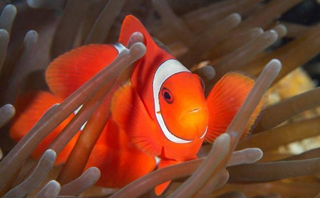 Brondbo foto oransje fisk