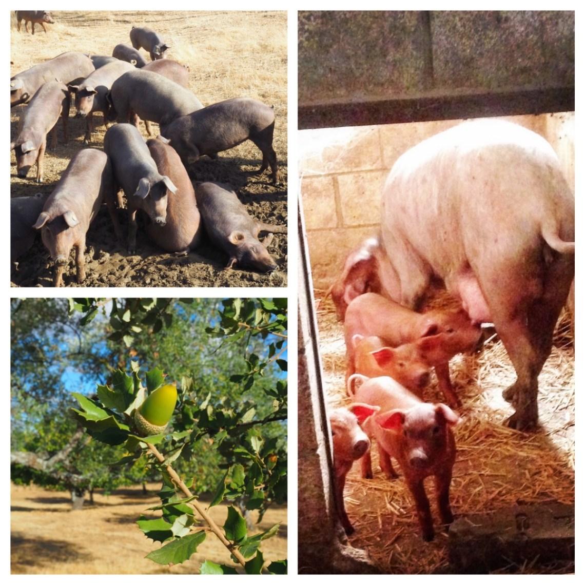 Griser og griser collage