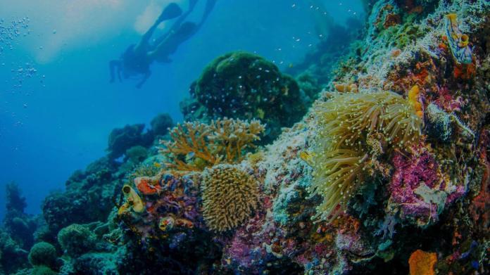Meridian Adventure Raja Ampat Indonesia Scuba Diving Marina Resort