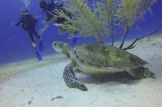marathon florida diving