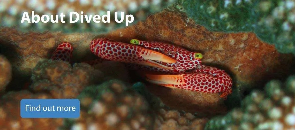 About Dived Up Publications