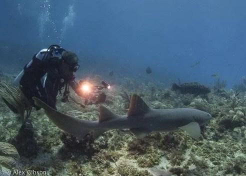 Nurse shark in natural light