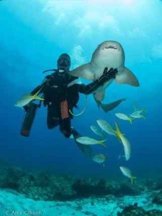 Dive guide holds shark in palm of his hand