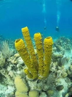 Sponges - Punta Perdiz