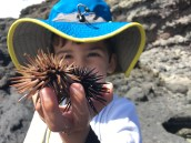 Joey discovered many types of sea urchins & claims they are his new favorite animal.