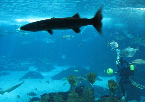 Tiburones_lisboa