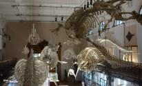 Musee_Oceanographique_Monaco_2013