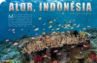 divemag74_Page_15