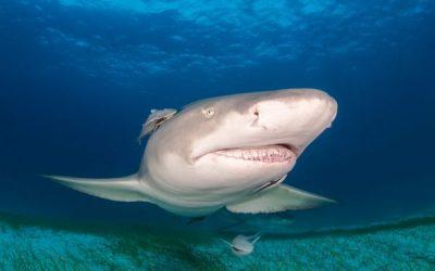 Sharks and their Teeth