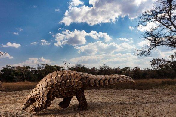 Brent Stirton – Sudáfrica – Wildlife