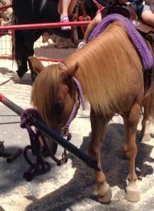 Pony at Ocean Park Farmers Market
