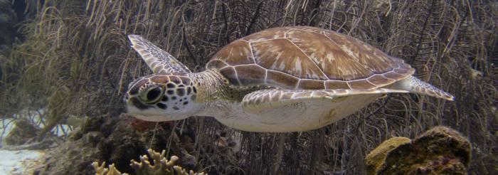 Rates Divers Paradise Bonaire