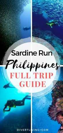 Sardine Run Moalboal