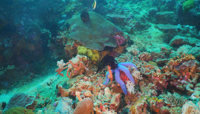 Fish and coral reef at diving. Wonderful and beautiful underwater world with corals and tropical fish. Hard and soft corals. Philippines, Mindoro. Diving and snorkeling in the tropical sea.