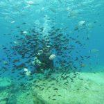 Fish Rock Green Bay