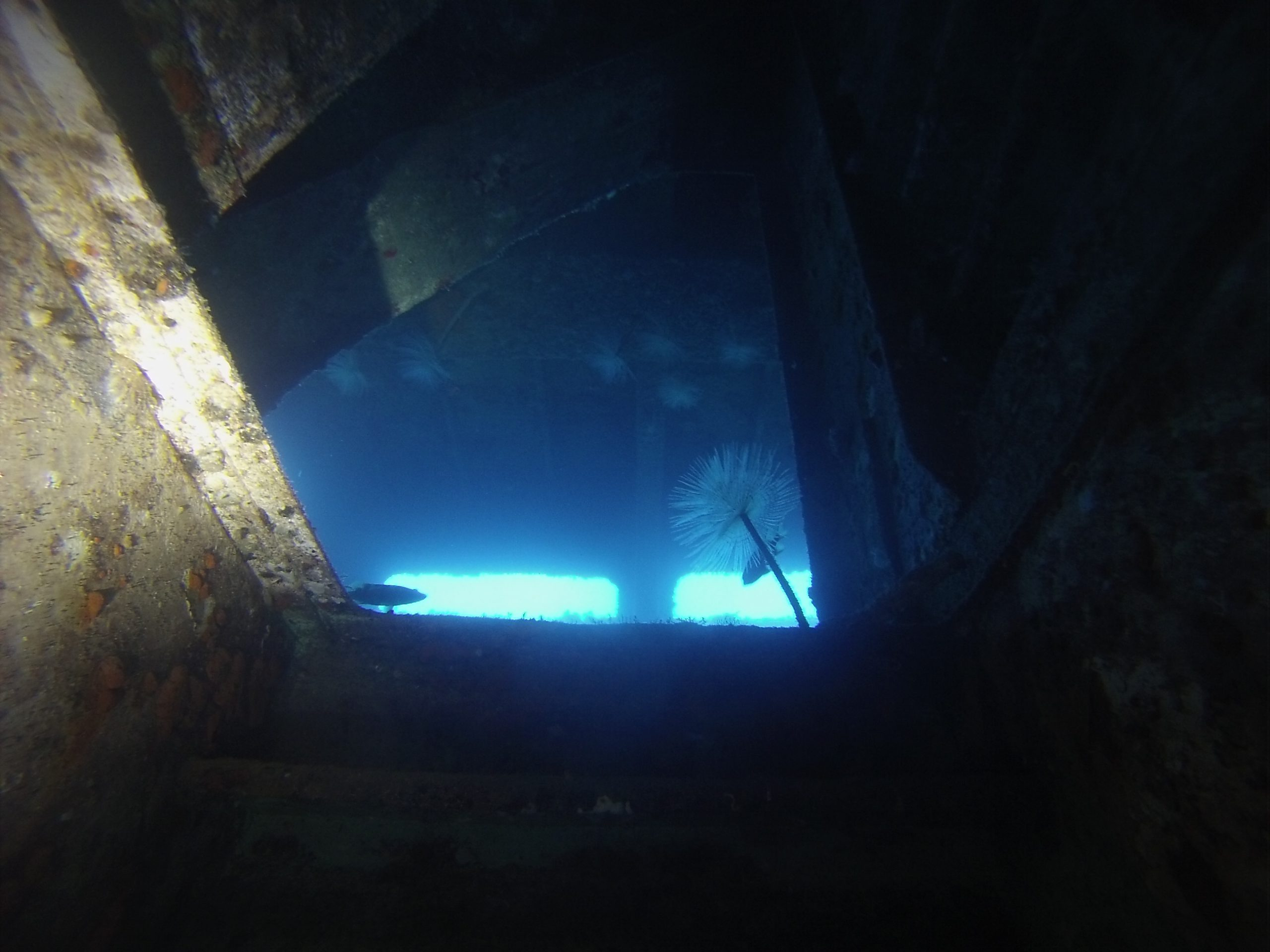 Feather star inside wreck