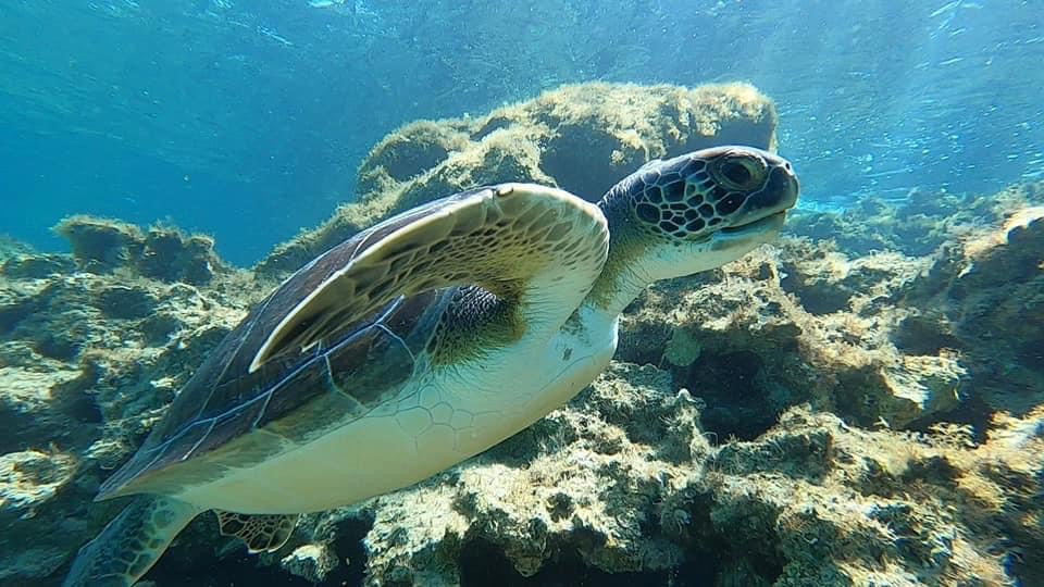 Turtle swimming towards the surface