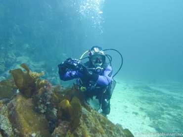 Fjellvegg, sandbunn, tare, (Adventure diver), dykker