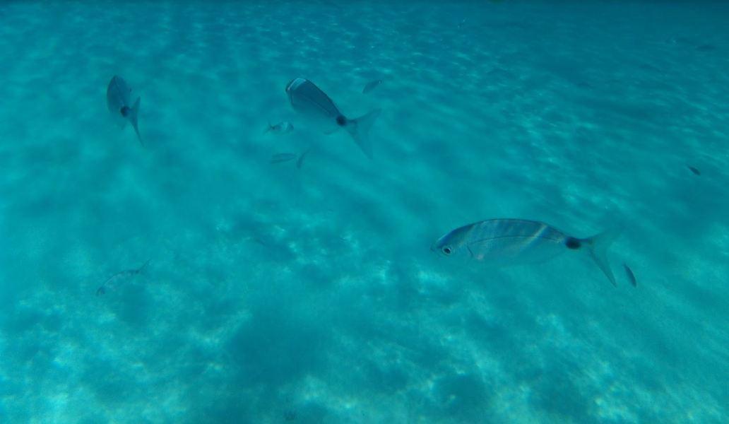 Snorkel con peces, otra actividad que hacer en Ibiza