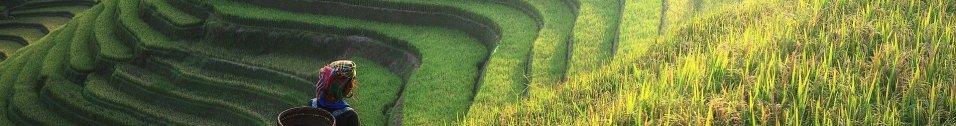 China Everbright International: Grüne Megatrend-Aktie aus dem fernen Osten