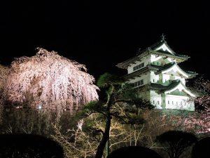 弘前城 夜桜と天守