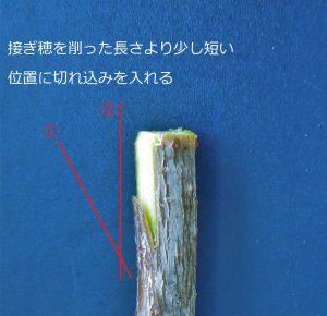 台木の調整②