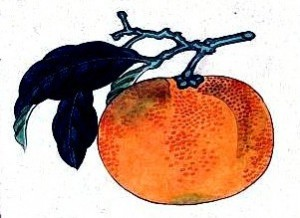 Art-Asian-Botanical-fruit-mikan-Japanese-orange1