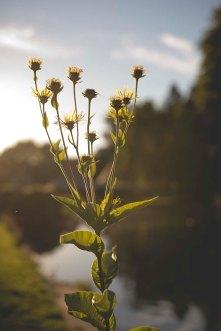 Wedding Busbridge Lakes, Surrey136