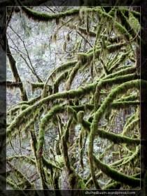 Alouette Valley Trail, Golden Ears