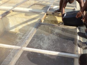 Catfish juveniles are being poured into their new home