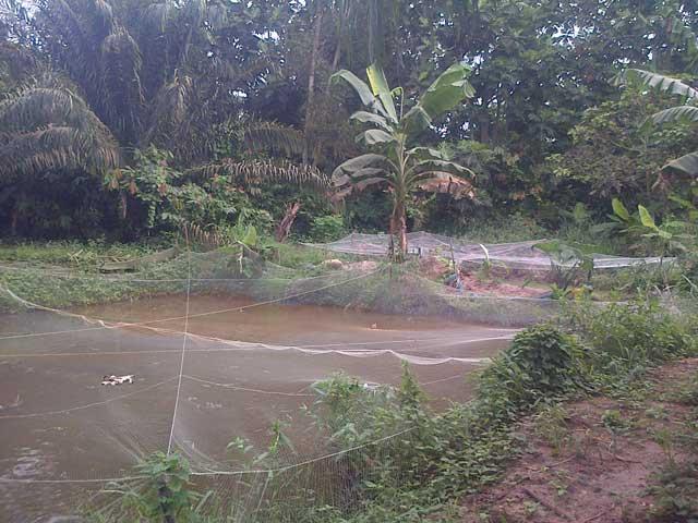Earthen pond in Idiroko Ogun State