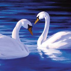 BVP_swans