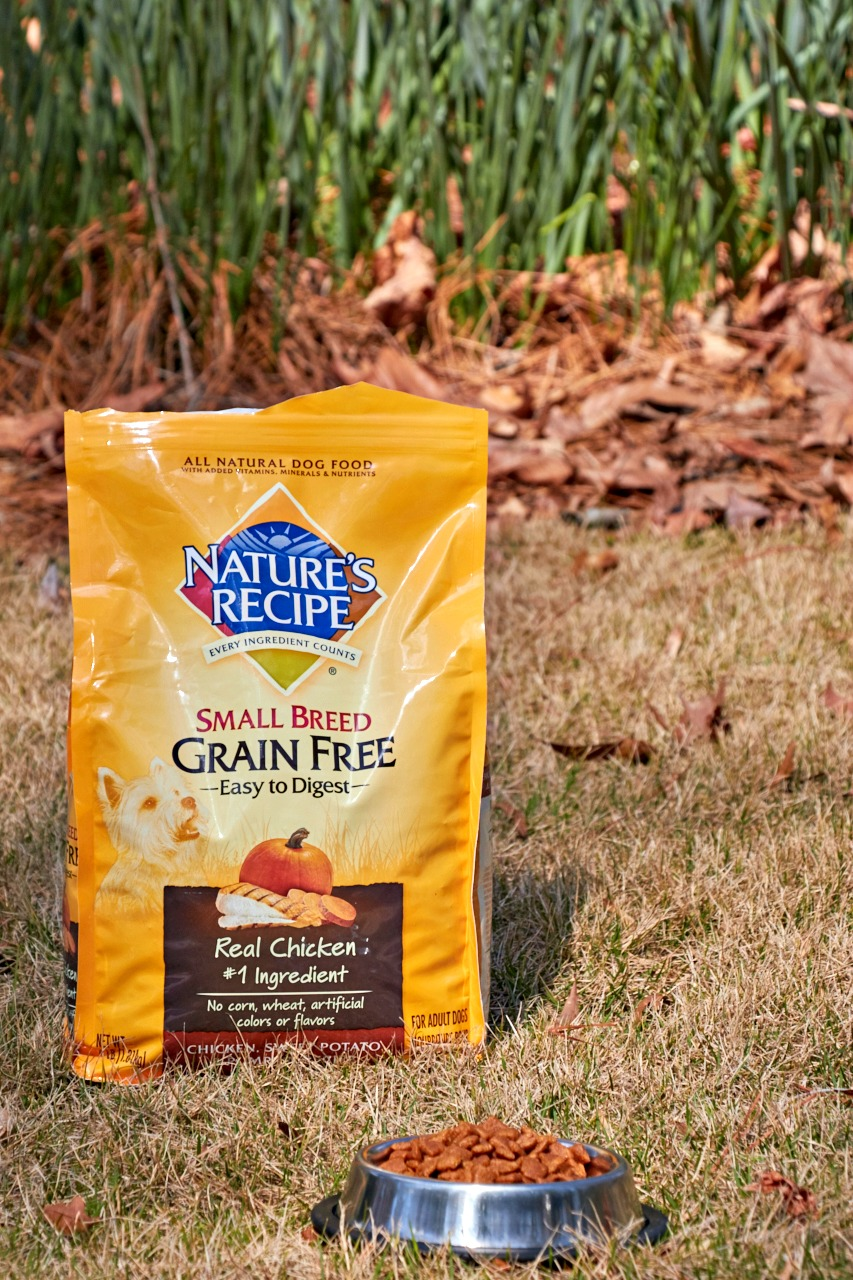 Nature's Recipe: Healthy and Beneficial Food for Your Dog