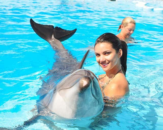 Swim with Dolphins Best Things to Do in Hurghada