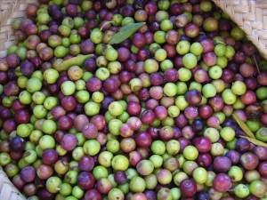 olijfolie-welke-is-gezond-en-welke-niet